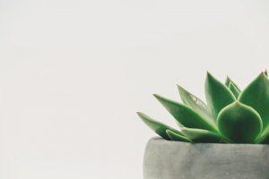 Little leafy green plant in a gray pot.